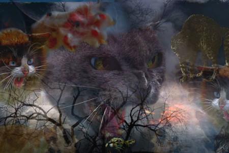 Cat's Nightmare, C.L. Francisco