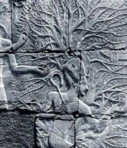Persea Tree, Karnak