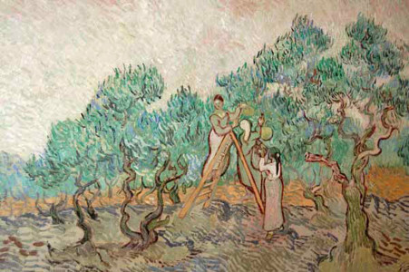 van Gogh, Olive Orchard